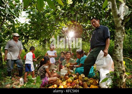 Belize, Punta Gorda, Distretto di Toledo, agricoltura cacao con il peck e mes famiglie del villaggio maya di san Foto Stock