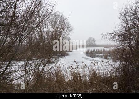 Un lago ghiacciato in inverno, con piante e alberi tutto intorno e arriva la neve verso il basso Foto Stock