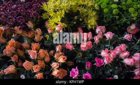 Colpo di fiori colorati Foto Stock