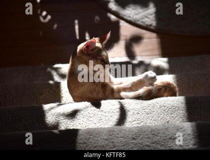 Kitten at play