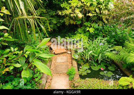 Regno unito un grande giardino stagno circondato bu - Alberi giardino piccolo ...