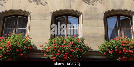 Finestra con fiori / finestra con bellissimi fiori sul davanzale Foto Stock