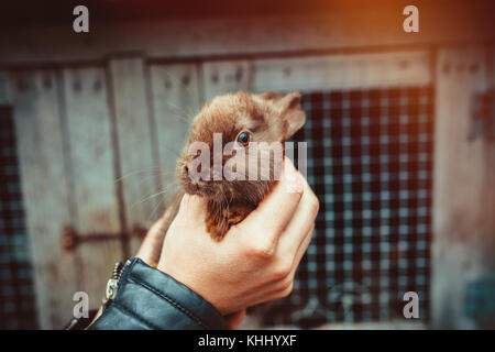 Baby bunny in mano Foto Stock
