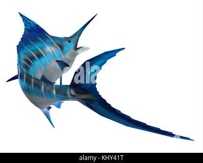 Marlin coda di pesce - la Atlantic Blue Marlin il pesce è il più grande pesce osseo ed è un popolare gioco di pesca Foto Stock