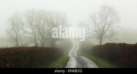 Vicolo del paese e gli alberi su foschia mattutina Foto Stock