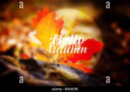 Banner con le parole Ciao Autunno, morbido colorato e focalizzata, i colori rosso e foglie Foto Stock