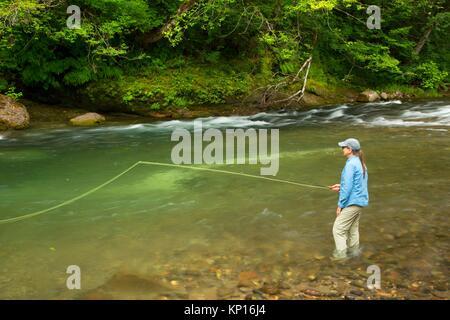 La pesca a mosca il fiume di Lewis, Gifford Pinchot National Forest, Washington. Foto Stock