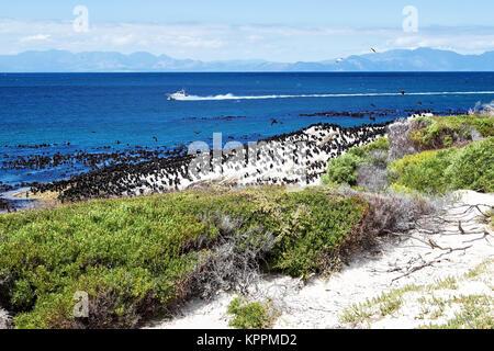 Vista sul mare e vicino a Spiaggia Boulders, Sud Africa Foto Stock