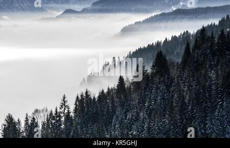 Boscoso pendio di montagna nella bassa valle giacente nebbia con sagome di evergreen conifere avvolta nella nebbia. Scenic paesaggio innevato nelle Alpi, Baviera, Germania. Foto Stock