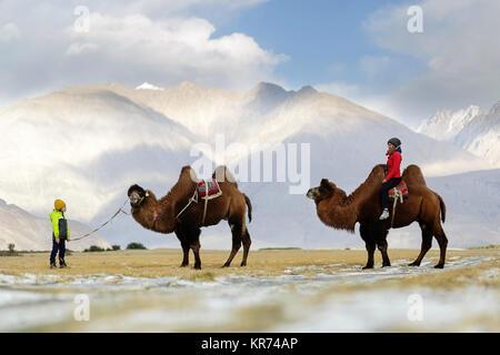 Madre e figlio in sella a doppia gobba cammelli e attraversando il deserto nella Valle di Nubra, Ladakh, Jammu e Kashmir India Foto Stock