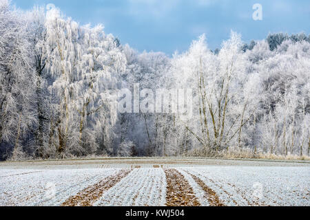 Bianco bosco di latifoglie, alberi erano in polvere con la trasformata per forte gradiente gelo su un freddo inverno mattina, il paese ha una granella di zucchero-come rivestimento, Renania-Palatinato, Foto Stock