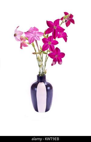 Mazzo di fiori di tabacco dolce in un vaso isolato su sfondo bianco