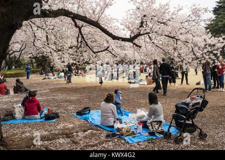 Giappone Tokyo: tradizionale picnic a celebrare i ciliegi in fiore e l'arrivo della primavera qui nel parco di Shinjuku Foto Stock