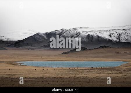 Mongolia inverno lago di montagna innevata nuvoloso bovini mucche al pascolo nelle praterie steppe mongole foggy Foto Stock