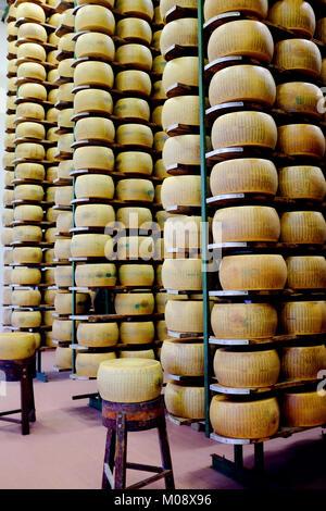 Parmigiano fresco impilati per stoccaggio ed essiccazione in un magazzino di una fabbrica di formaggio in Parma, Foto Stock