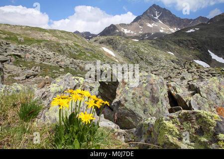 L'Italia, il Parco Nazionale dello Stelvio. Vicino al Passo Gavia nelle Alpi dell'Ortles. Paesaggio alpino. Sullo sfondo: Corno dei Tre Signori picco, 3360m alta.