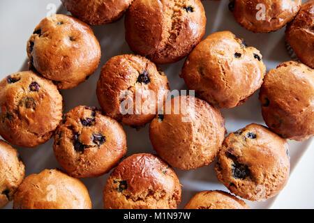 Display del pane appena sfornato muffin ai mirtilli In Coffee Shop Foto Stock