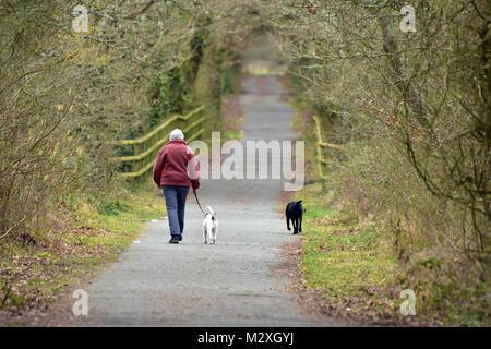 Un anziano o di mezza età o lady donna a piedi i suoi cani lungo un vicolo del paese nella stagione invernale. due cani per camminare con i master in paese Foto Stock