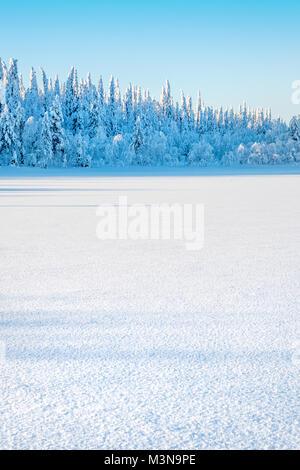 Snow-laden foreste del nord della Finlandia