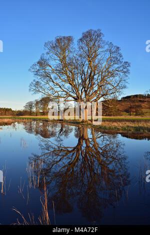Fino al fiume in piena, Northumberland Foto Stock