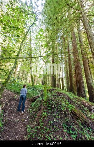 Una donna matura in piedi tra le torreggianti sequoie in California del Nord Foto Stock