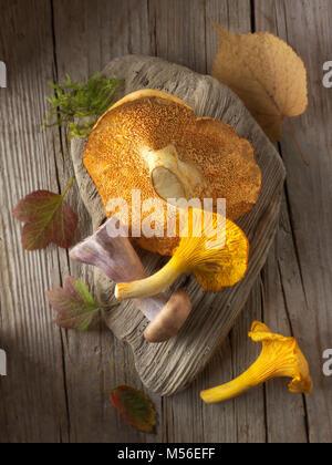 Freschi raccolti chanterelle selvatici o girolle (Cantharellus cibarius), farina di semola rimacinata (hydnum repandum) o funghi hedgehog, Pied Bleu,