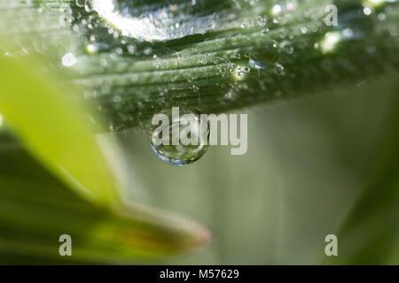 Una goccia, astratta, sfondo, luminosa, pulita, colore, rugiada, drop, fresche, verde foglia, vita, della luce, Foto Stock