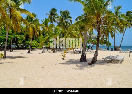 Spiaggia di sabbia bianca con lettini, molte palme, blu cielo e oceano turchese del mare dei Caraibi, Repubblica Foto Stock