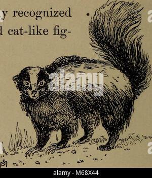 """""""La vita familiare in campo e del bosco; gli animali, uccelli, rane e salamandre"""" (1898)"""