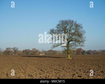 Vista del paesaggio di di un singolo bare Oak tree in un campo arato con un villaggio nel lontano sullo sfondo Foto Stock