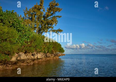 L'onda tagliare rocce all'estremità orientale di Le Morne Beach a Maurizio, con le foreste di mangrovie e altri Foto Stock