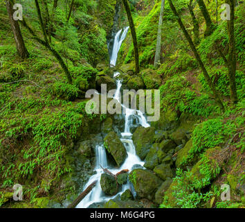 Le cascate Inferiori, cataratta Creek, Monte Tamalpais, Marin County, California Foto Stock