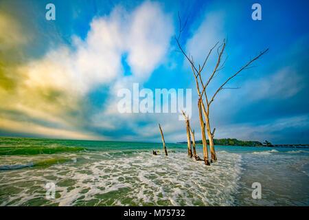 L'Affogato foresta, Longboat Key, Florida Guulf del Messico Foto Stock