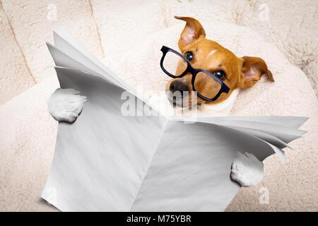 ... Cool funny jack russell cane la lettura di un vuoto vuoto giornale o  rivista che indossa 8afd0c603bc4