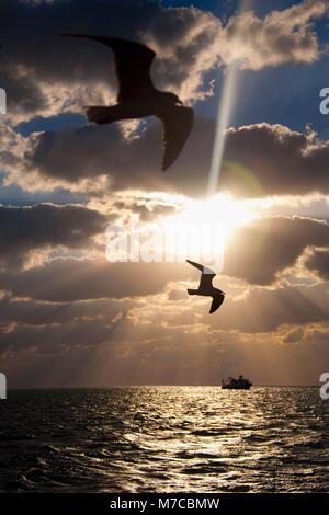 Due uccelli che vola sopra l'oceano al tramonto, Key West, Florida, Stati Uniti d'America Foto Stock