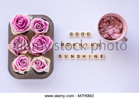 Le rose rosa in stagno di muffin con piastrelle lettera preventivo
