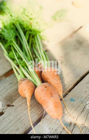 Appena lavato per intero le carote con un top sul vecchio legno scuro tavolo. Il fuoco selettivo Foto Stock