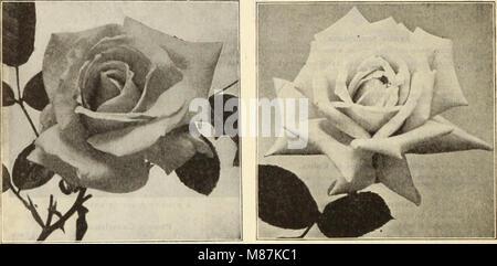 Dreer all'ingrosso Listino prezzi - semi, piante, lampadine, etc (1913) (20871767960) Foto Stock