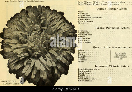 Dreer all'ingrosso Listino prezzi - semi, piante, lampadine, etc (1913) (21067711121) Foto Stock