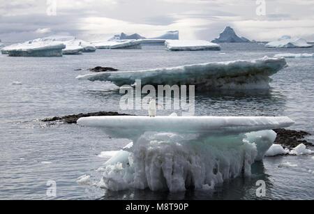 Adelie penguin su un iceberg a Brown Bluff, Antartide con montagne e ghiacciai della distanza Foto Stock