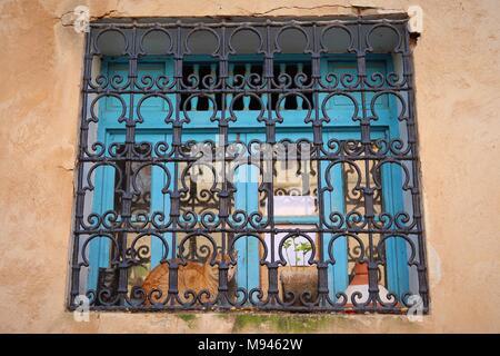 Un gatto di zenzero si siede su un davanzale dietro una decorativa in metallo schermata scrollwork nel giardino andaluso a Rabat, Marocco