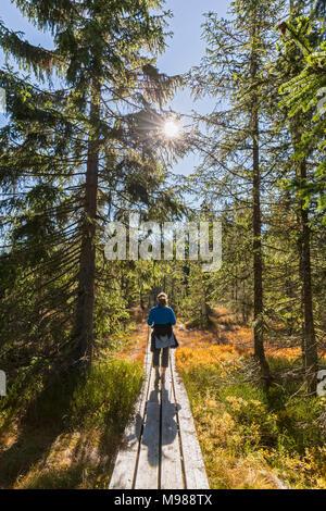 In Germania, in Baviera, Bassa Baviera, Parco Nazionale della Foresta Bavarese, femmina escursionista sulla passerella in legno Foto Stock