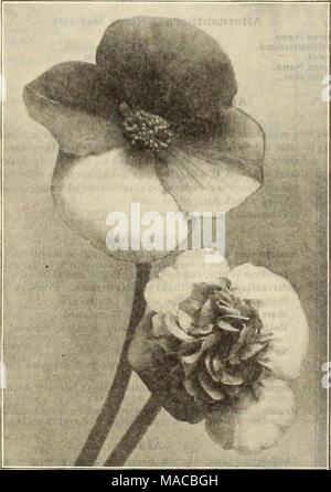 . Dreer all'ingrosso listino prezzi : semi, piante, lampadine, etc . Foto Stock