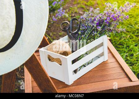 Una cassa piena di appena tagliato Lavanda fiori su una sedia in un campo di lavanda.