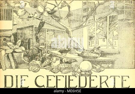 . Die Gefiederte welt . WELT Zeitschrift für VOGELLIEBHABER. Begründet von Dr. Karl Ruß. Herausgegeben von Karl Neunzig in Hermsdorf bei Berlin. INHALT: Ein Beitrag zur Pflege der Weichfresser im inverno. Von Primarius Dozent Dr D. Pupovac, Wien. Brillenvogel - Zosteropidae. Von Alfred Weidholz, Wien. Ornithologische Beobachtungen in den Jahren 1915 und 1916. Von Zahnarzt H. Lauer, Witzenhausen. (Fortsetzung.) Die Qroßtrappe - Otis tarda Linni. Von Vincenz Sommer, Münster mi W. Kleine Mitteilungen. - Vogelschutz. - Aus den Vereinen. - Redaktions- briefkasten. Abonnementspreis vierteljährlich M. Foto Stock