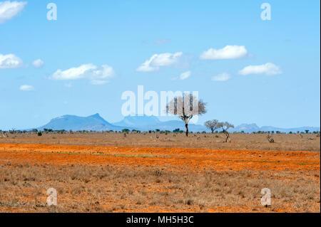Bellissimo paesaggio con nessuno albero in Africa Foto Stock
