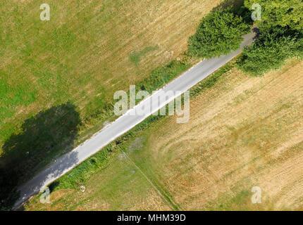 Abstract vista aerea, vista verticale di un percorso che attraversa la foto diagonalmente, con due alberi di grandi dimensioni alla fine del percorso Foto Stock