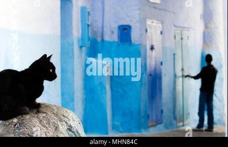 Chefchaouen, Marocco; cat nella città vecchia con tipico blu-case dipinte Foto Stock