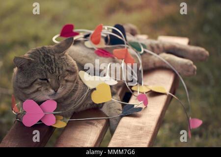 Un gatto seduto sulla carta multicolore cuori Foto Stock