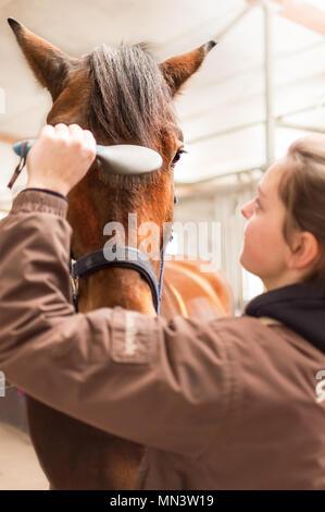 Primo piano mostra una giovane donna in un allevamento di cavalli. Ella spazzole la criniera nel volto del suo purosangue. Si tratta di un Hanoverian che ama come esso. Foto Stock
